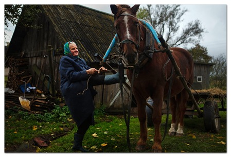 babulya-horse