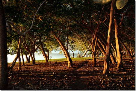 Trees-at-sunset-South-West-Bay-Malekula